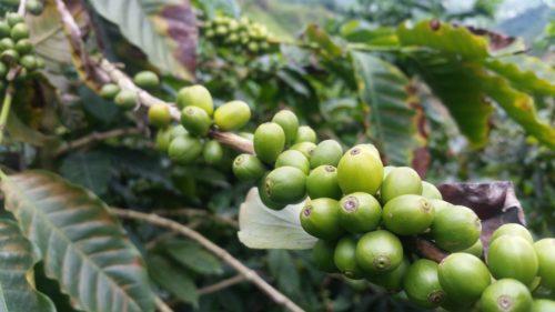 YREN'-YREN-voyage-sur-mesure-colombie-café