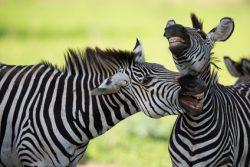 Voyage sur mesure Tanzanie vu par YREN'