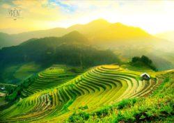 YREN' voyage sur mesure Sri lanka rizière