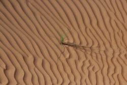 YREN'-YREN-voyage-sur-mesure-Oman