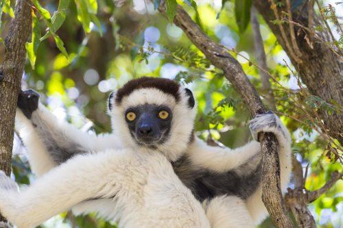 YREN' voyage sur mesure Madagascar
