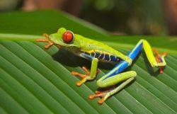 YREN' courtier en voyages sur mesure Costa Rica