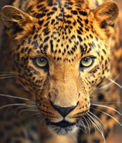 YREN'-yren-courtier-voyages-sur-mesure-Afrique