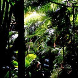 YREN'-yren-courtier-voyages-sur-mesure-praslin-seychelles-vallee-mai