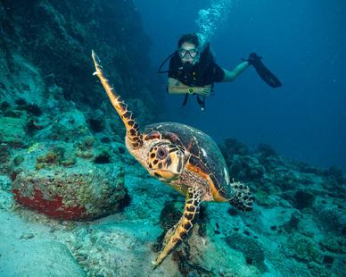 YREN'-yren-courtier-voyages-seychelles