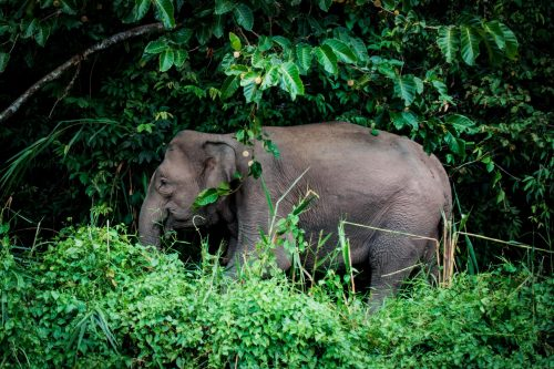 YREN'-yren-courtier-voyages-sur-mesure-Borneo