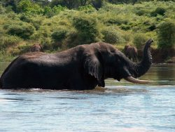 YREN'-yren-afrique-du-sud-zimbabwe-zambeze-elephants
